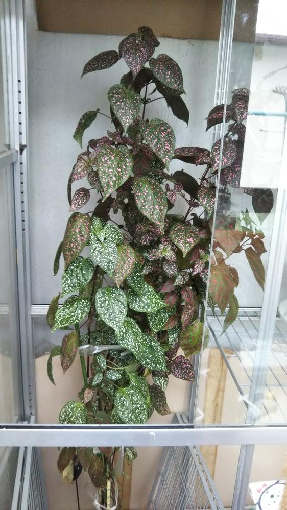 これは何て言う植物でしょうか?教えてください。