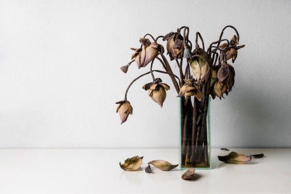 枯れてしまっているのですがこれはなんて言う名前の花ですか?