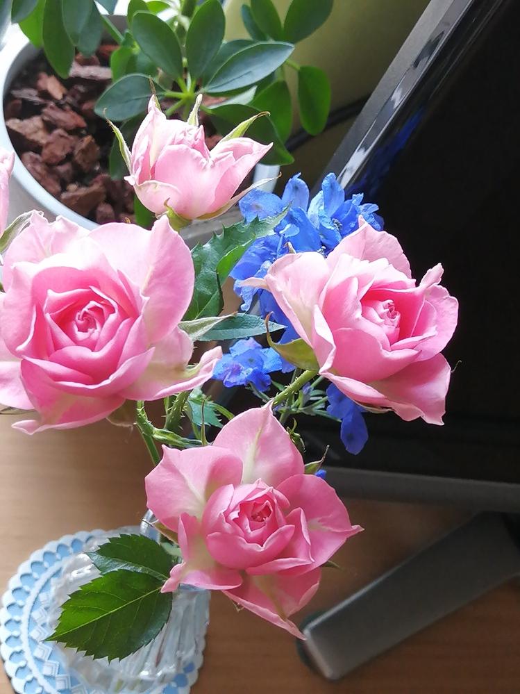 このバラの品種を知りたいです。よろしくお願いします。