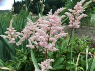 この花の名前を教えて下さい。 ピンクの可愛い花です。