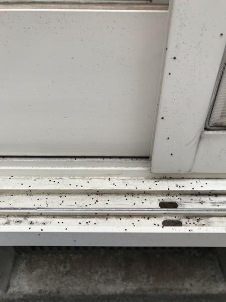 家の裏の網戸と雨戸に、よく付着する見た目が虫の卵みたいなやつ、触ると土の粉みたいです。これは何ですか? 是非おしえてください。