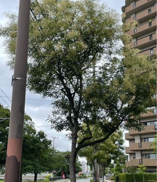 6月の状態ですが、画像の木は何という種類の木ですか?