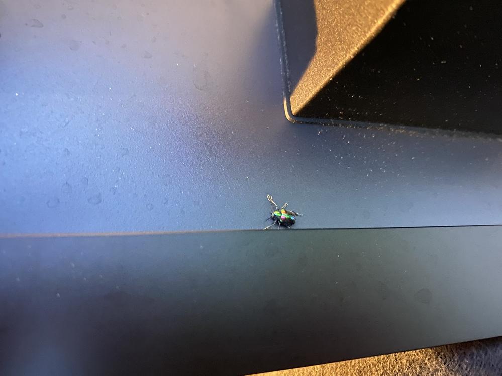 この虫を教えてください。 子供が気になっているみたいで教えたいのですが調べても分かりません。
