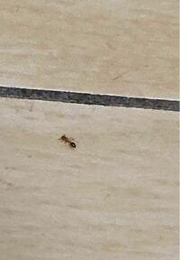 【虫注意】 家の中にこのような虫が30匹ほど現れて驚きました。 小さい虫なので写真が見づらいかもしれませんが、この虫は何という虫でしょうか? また、どのような原因で現れるのでしょうか?