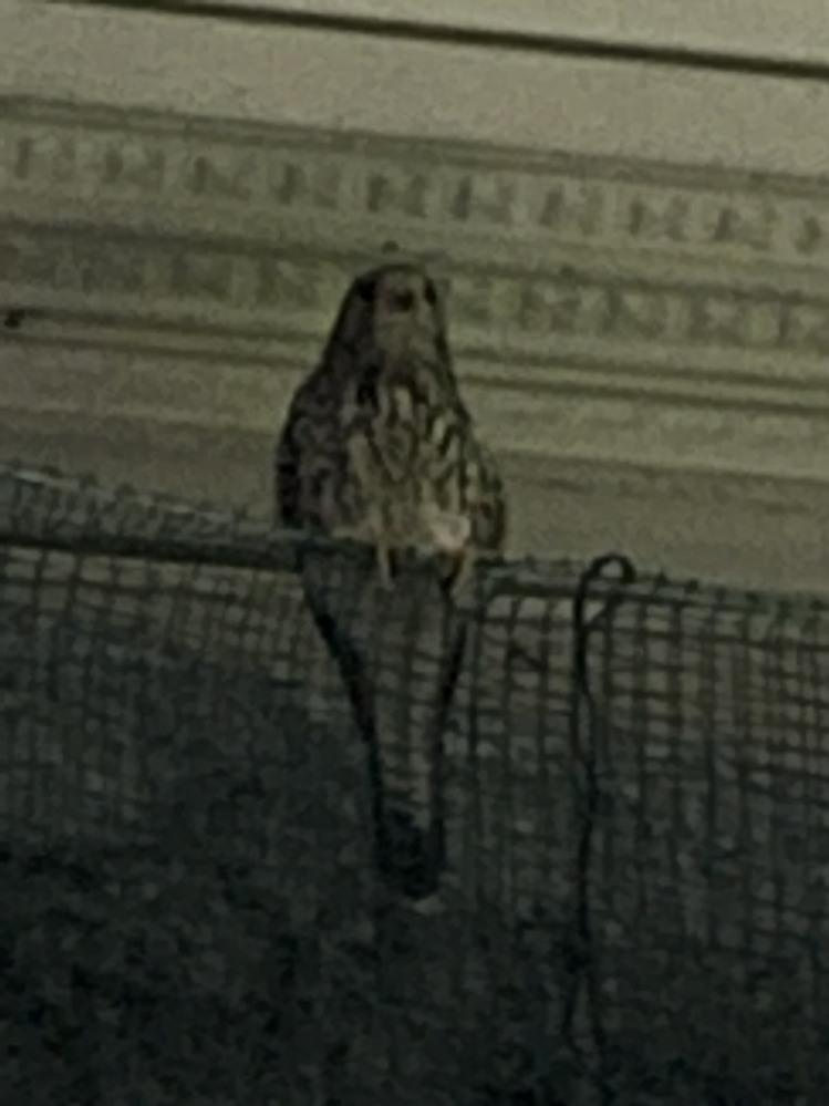 住宅街であまり見かけない鳥を見たのですが この鳥の名前がわかる方いらっしゃいますか?