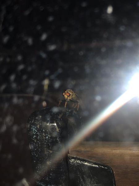 この虫の名前を教えて欲しいです。 仮面ライダーのような目をしていてトンボのような感じがします。