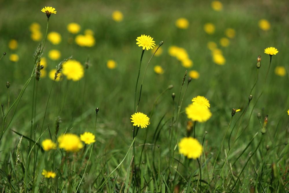 この草花の名前を教えて下さい。 河川の土手に群生していました。 写真が小さくて分かりずらいですが・・・