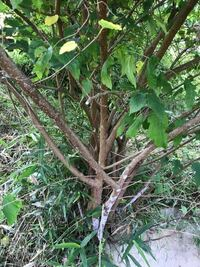 桑の木を剪定したいのですが、根元から複数の幹が出ています。この場合、幹の本数を減らす形で剪定した方が良いのか、維持したまま剪定したほうが良いのか、はたまた一本だけにしたほうが良いのか、どうなんでしょう 。今のままでは混み合い過ぎているような気がします。