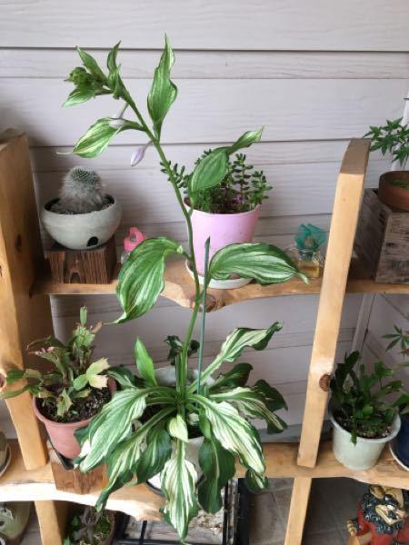 教えて下さい。 これはなんと言う植物でしょうか?