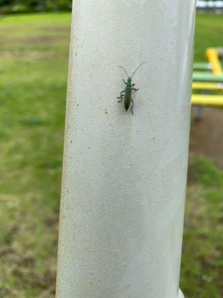 これは何の虫か分かりますか? よろしくお願いします。