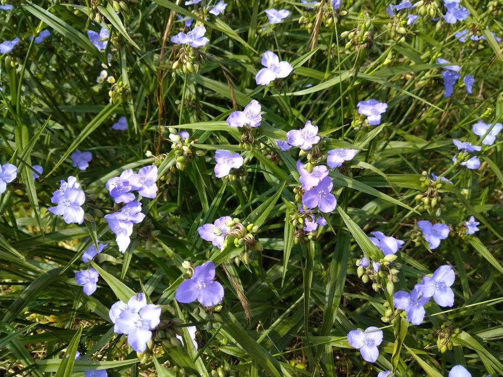 ↑この花の名前知ってる方いたら教えて頂きたいです。 すごく気になってます。 よろしくお願いします。
