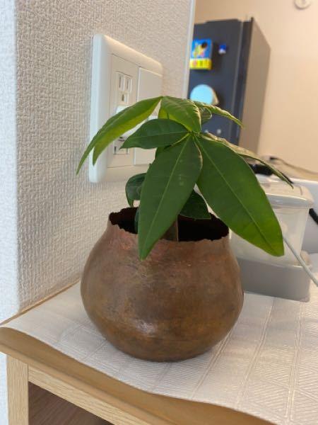ikeaで買ったのですが、この植物は何ですか? 蜂は変えてあります