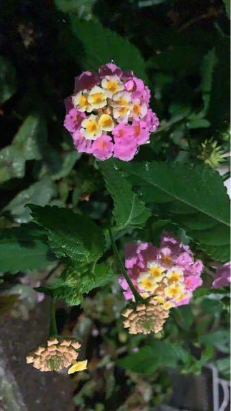 これはなんという花ですか???すごい小さかったんですけどとても可愛くて気になりました…!