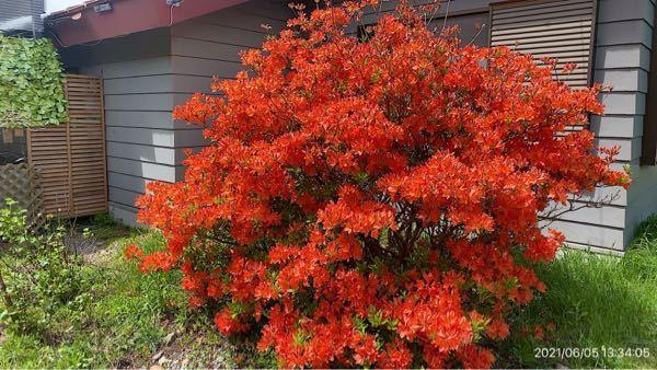 この花の名前ご存知ですか? 六月上旬の長野蓼科です。よろしくお願い申し上げます。