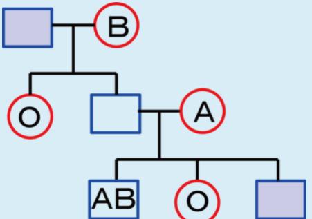 図はある家族のABO式血液型を示している。 「赤い丸」は女性・「青い四角」は男性を表わしており、それぞれの図形の中に血液型が示してある。なお、血液型が不明の場合、書かれていない。右下の孫の男子の血液型が左上の祖父の血液型と一致する確率が何%かを求めなさい この遺伝子の問題が分からないので教えてください