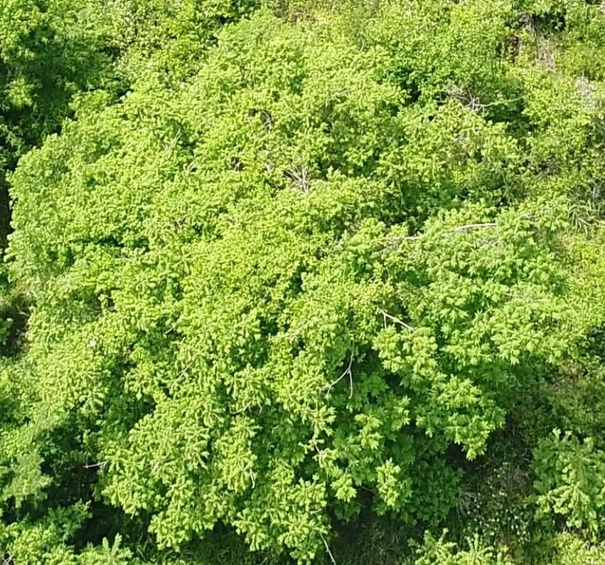 質問です。 河川敷に生えていたものです。この植物の名前を教えていただきたいです。 高さは2m以上あったと思います。 こんな感じの名前だった気がする、とかでも大丈夫です。 遠く粗い画像で申し訳ない...