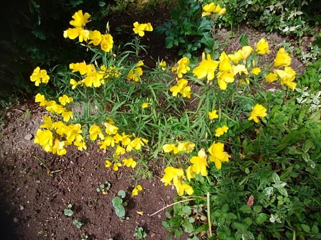 この草花の名前を教えていただきたくお願いもうしあげます