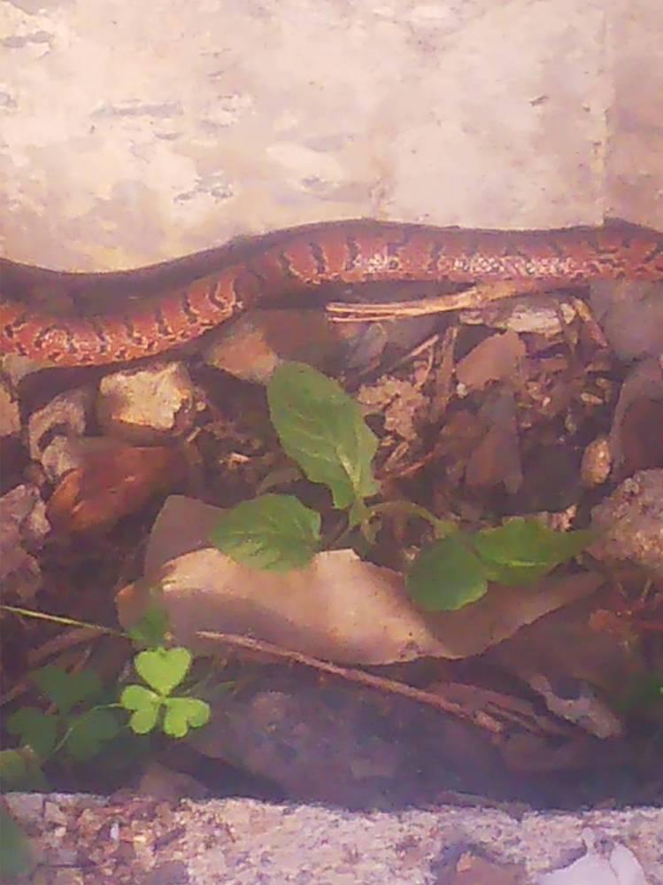 この蛇の名前が知りたいです。