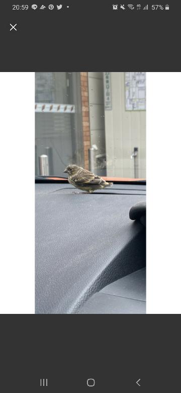 この鳥はなんという鳥ですか? 場所は北海道です。