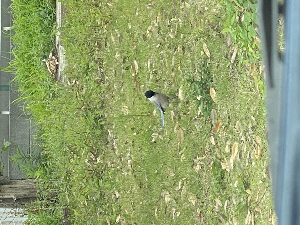 この鳥はなんですか?