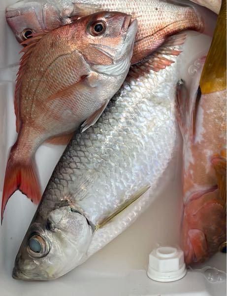 教えて下さい この魚の名前はなんでしょう?
