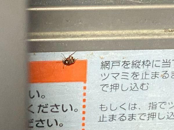 家にいる虫についての質問です。【写真あります】 【特徴】 1~2mmぐらい 基本、壁や天井に張り付いてる 羽はあるようでたまに飛びます 最近、この虫が家で大量発生してましてます。殺虫剤がゴキジェットしかなくて、ふりまいてるんですが、どんどん湧いてきます... 良い殺虫剤や対処法を教えて頂きませんか?(写真見ずらかったらすみません...)