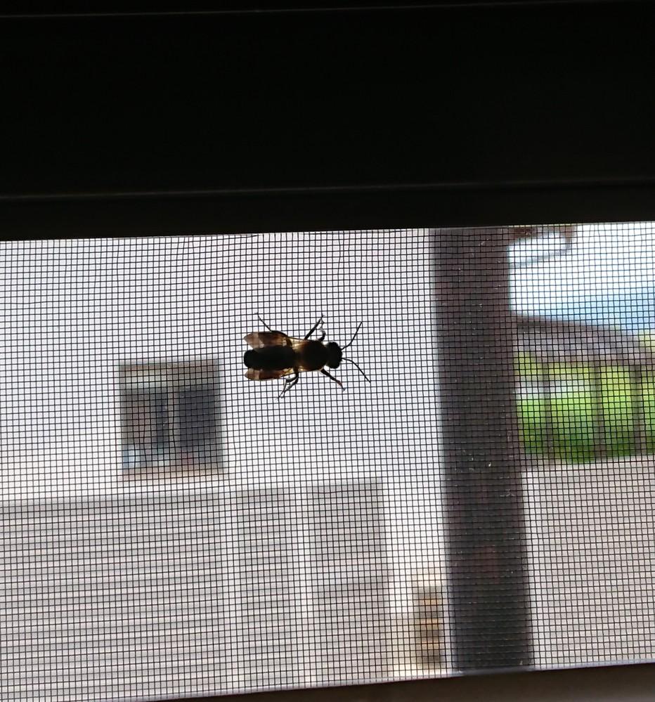前回、画像を添付しそこねて 追加出来ないよう?なので改めて質問することにしました。 初夏から秋にかけて、どこから侵入するのかわからない虫がいます。ほぼ毎日、1~3匹見つけます。 【虫コロリ】をか...
