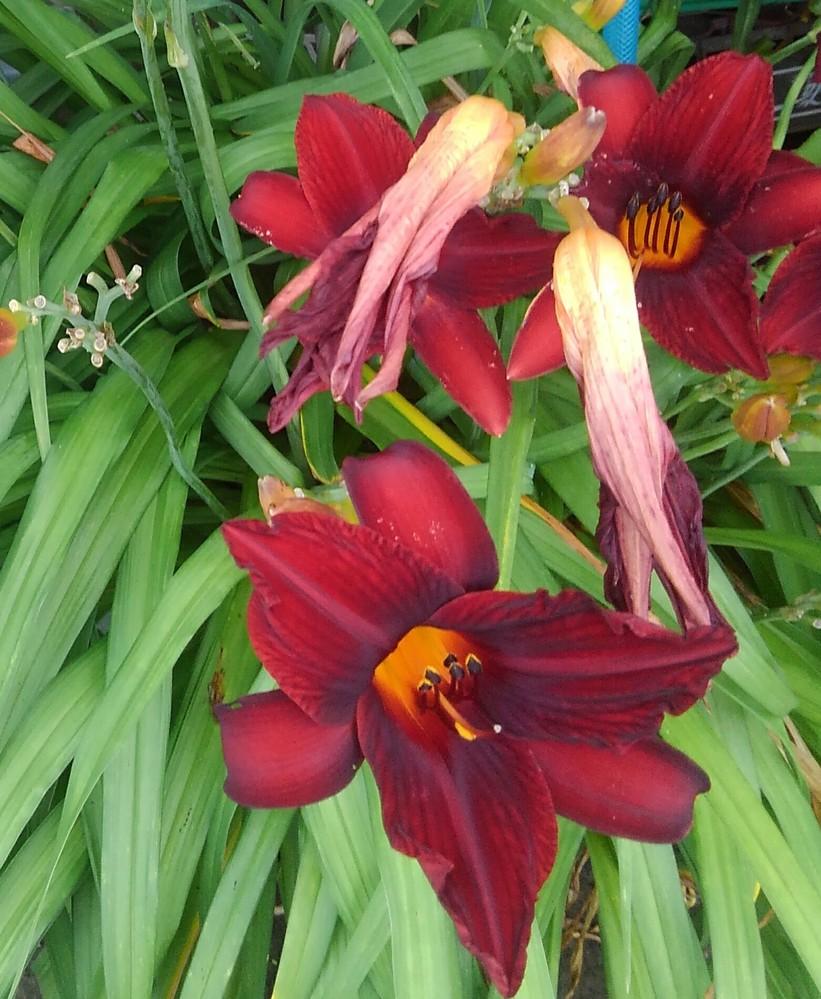 この花の名前を教えてください。 よろしくお願いいたします。