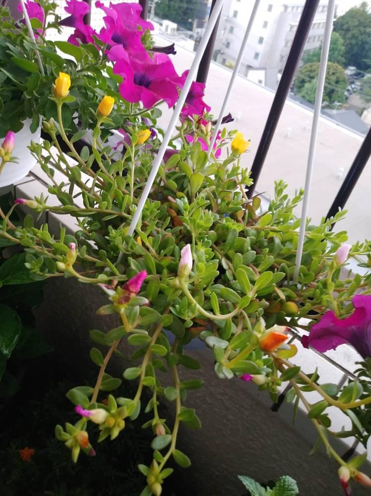植物です。 黄色のお花みたいなのが見えますが、名前が解らず困っています。 宜しくお願いします。