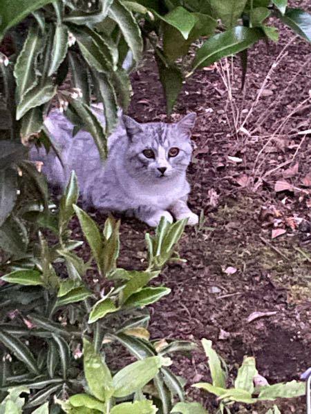 庭に猫がよくいるんですが飼い猫でしょうか? また、種類はなんですか? 懐かないかな