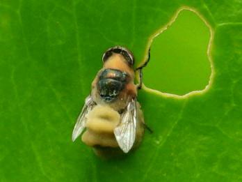 この虫さんの名前教えて下さい。