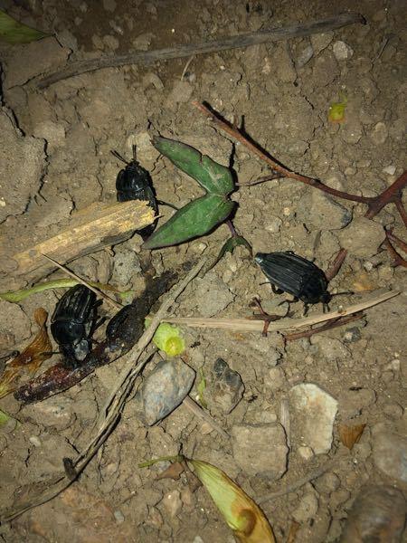 この昆虫はだれですか