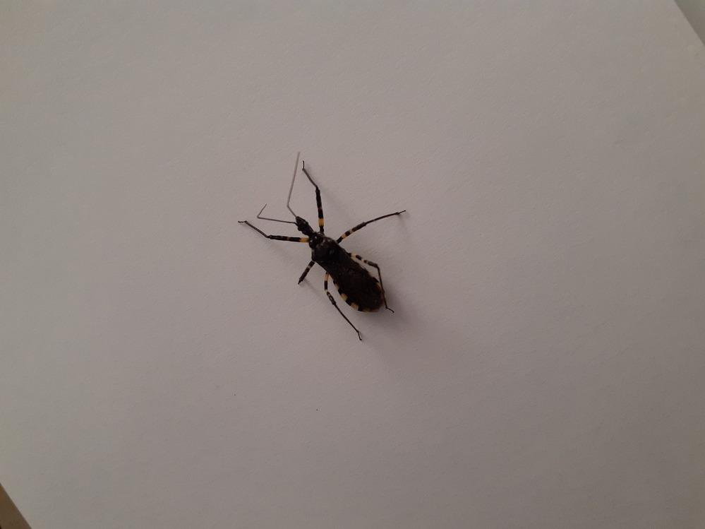 なんという虫でしょうか。