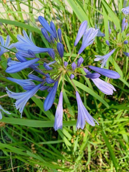 ネリネ?リコリス?でしょうか? とてもキレイな花でしたので、撮影しました。 ご存知の方、教えてください。 よろしくお願いします。