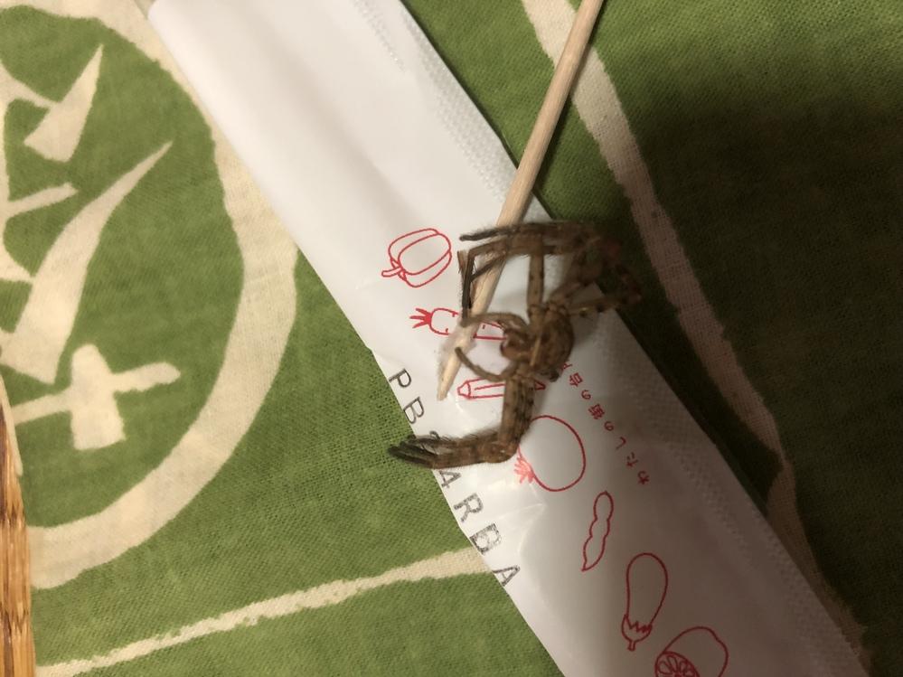 ちょっと見にくいですけどこれが蜘蛛の死骸か抜け殻か分かる人いますか? 蜘蛛の巣に絡まってたんですがひょっとしたら抜け殻かなぁと思ってます。