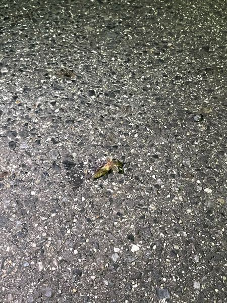 この虫は初めてみました。 知っている方教えてください。
