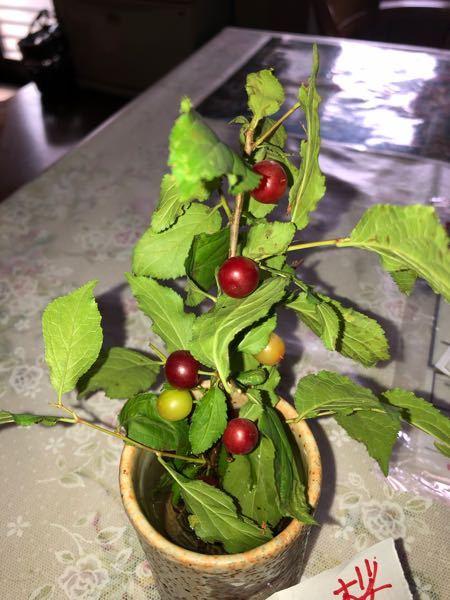 これはなんという植物の実でしょうか?