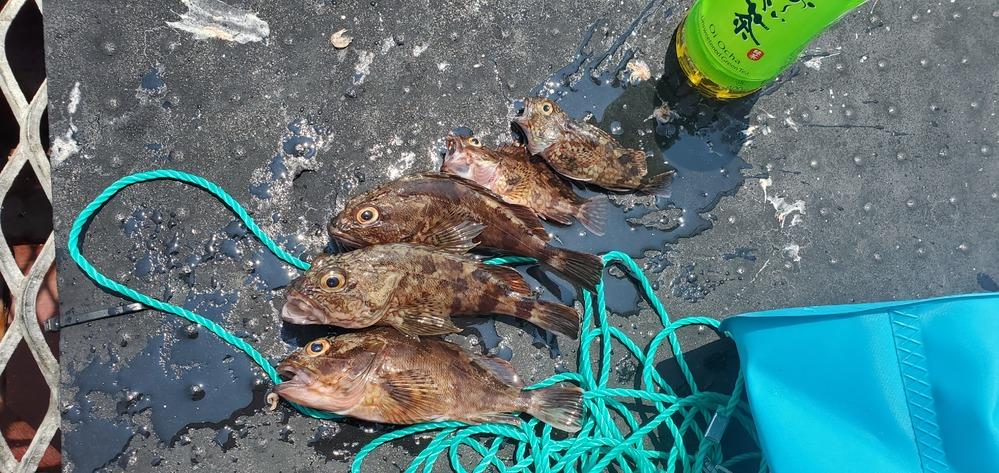 釣りをしていたら隣のおっちゃんがくれて大漁みたいになってしまいました。 ガシラ(カサゴ)の料理でおいしい食べ方はなんですか?