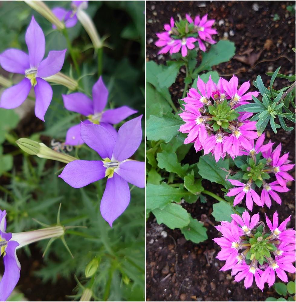この二つの植物の名前を教えていただけませんか。昨日散歩中にみつけました。 詳しいかたよろしくおねがいします。