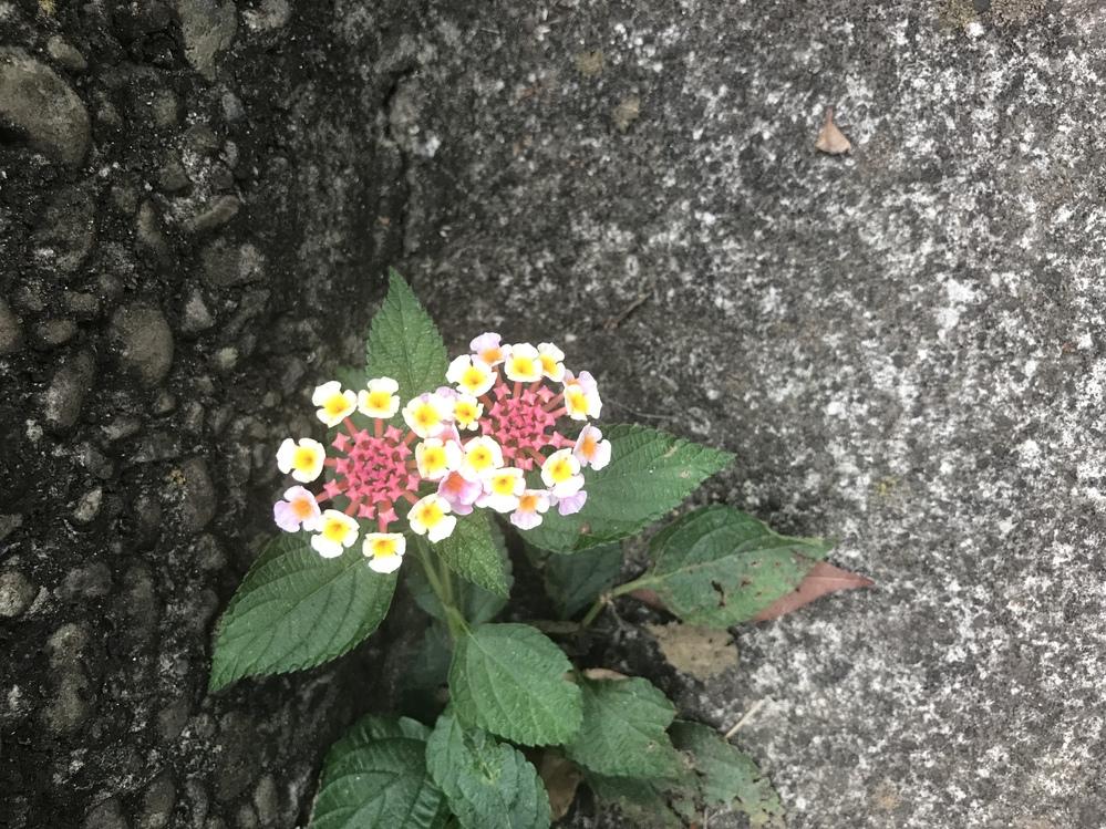 この花の名前を教えて下さいm(_ _)m