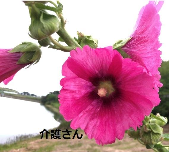 この花の名前は何ですか? 撮影日は2021年6月12日で撮影場所は兵庫県です。 よろしくお願いします。