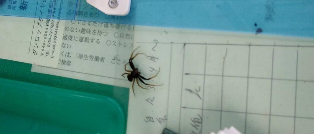 この蜘蛛見たことありません。 毒蜘蛛ですか?
