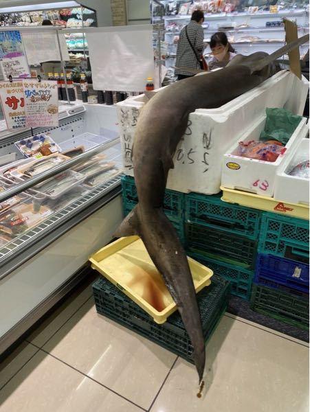 三田(田町)にスーパーって、ありましたっけ? ────── 「三田のスーパーの魚コーナーにシュモクザメ(ハンマーヘッドシャーク)売ってるんやけど…」というドッキリのようなツイートをして注目を集め...