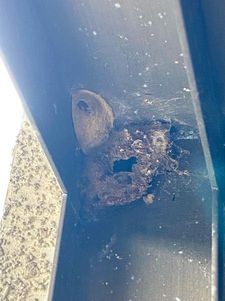玄関の扉に、虫の巣のようなものを見つけました。 2種類あるように見えますが、 何の虫なのか教えてほしいです。 穴が空いているので、もう既に出て行ったのか。 細いものでガリガリ落としていいのか、危ないのか。 分かる方、教えてください。 宜しくお願いします。