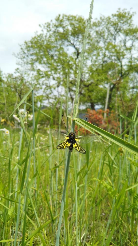 この虫は何ていう虫でしょうか? 5/1に撮影しました。