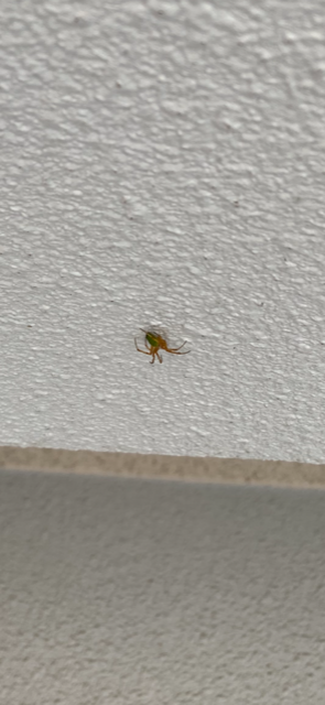 お腹がきれいな青いクモがいるのですが、毒グモの心配はないでしょうか? 足の部分は薄い黄色のようなクリーム色です。 敷地内に巣を作っていて心配です・・・ 早急にお返事いただけると助かります(><)