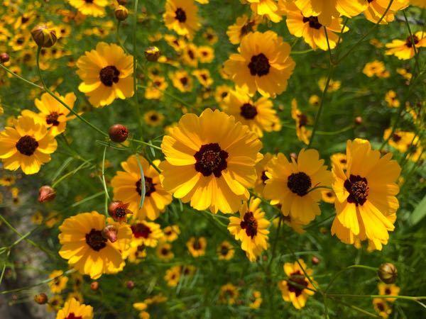 この花の名前が検索しても分からないんですけど、 分かる方いらっしゃいましたら教えてくださいm(._.)m