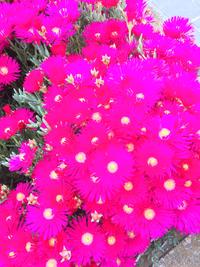 植物に詳しい方、教えて下さい。 このお花は何という名ですか?