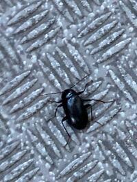 タンスの中に、こんな虫が居たのですが、これはどんな名前ですか? また、どうしてタンスの中に入ったのですか?
