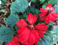 この花の名前は何ですか? 撮影日は2021年7月14日で撮影場所は兵庫県です。 よろしくお願いします。